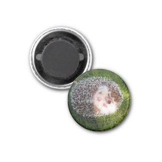 Porcupine 1 Inch Round Magnet