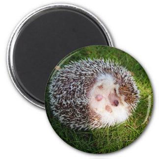 Porcupine 2 Inch Round Magnet