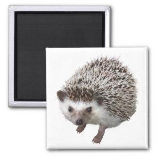Porcupine 2 Inch Square Magnet