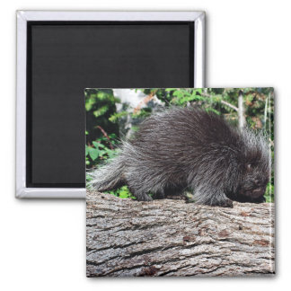 Porcupine 2 Inch Square Magnet