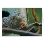 Porcupine 2 Note Card