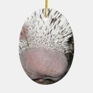 Porcupine close up ceramic ornament