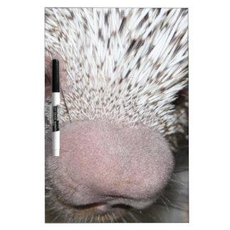 Porcupine close up dry erase board