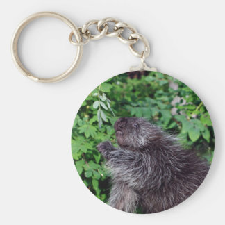 Porcupine Feeding Key Chains