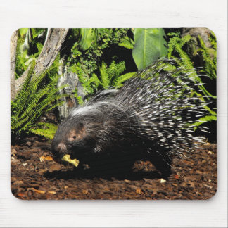 Porcupine feeding mouse pad