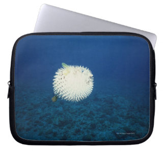 Porcupine Fish Laptop Computer Sleeves