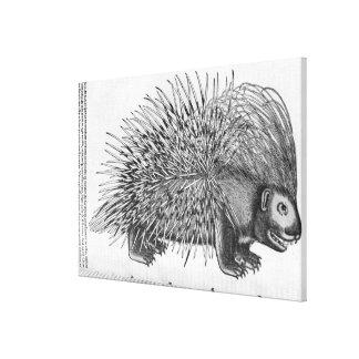 Porcupine, from 'Historia Animalium' Canvas Print