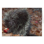 porcupine greeting cards