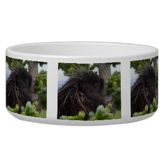 porcupine hugging tree bowl