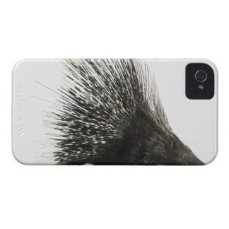Porcupine iPhone 4 Cover