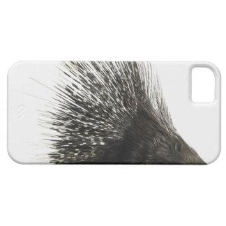 Porcupine iPhone SE/5/5s Case
