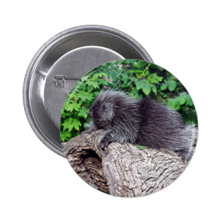 Porcupine Lounging 2 Inch Round Button