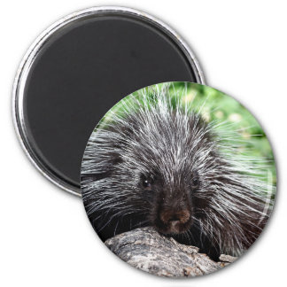 Porcupine Lounging 2 Inch Round Magnet