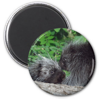 Porcupine - Mom and Baby 2 Inch Round Magnet
