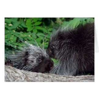 Porcupine - Mom and Baby Greeting Card