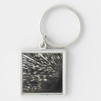 Porcupine quills keychain