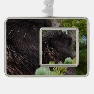 porcupine silver plated framed ornament