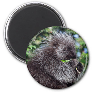Porcupine Snacking 2 Inch Round Magnet