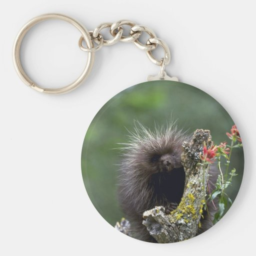 Porcupine-summer-youngster Basic Round Button Keychain