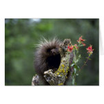 Porcupine-summer-youngster Greeting Card
