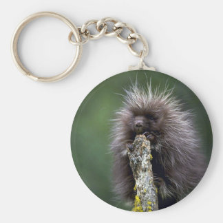 Porcupine-summer-youngster Key Chains