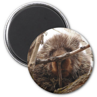 Porcupine Up a Tree Round Sticker | Animal Photo Magnet