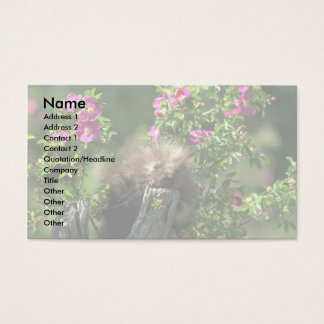 Porcupine-youngster in wild rose business card