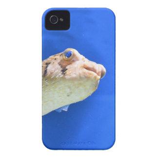 Porcupinefish Case-Mate iPhone 4 Case
