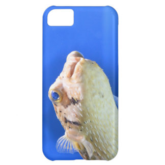 Porcupinefish Case For iPhone 5C