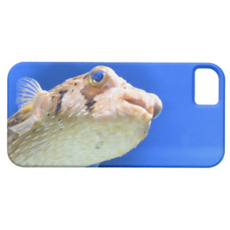 Porcupinefish iPhone 5 Cover