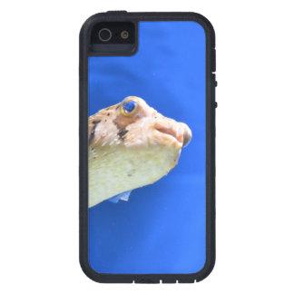 Porcupinefish iPhone 5 Cases
