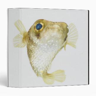 porcupinefish de la Punto-aleta (hystrix del Diodo
