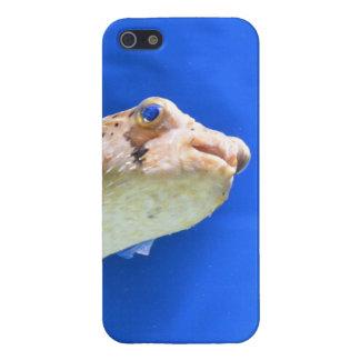 Porcupinefish iPhone 5/5S Cases