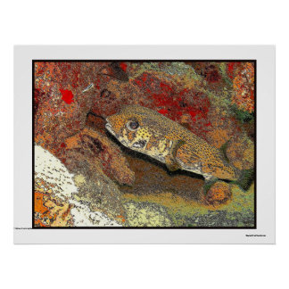 Porcupinefish on red coral poster