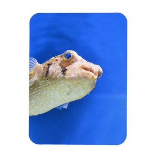 Porcupinefish Flexible Magnets