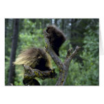 Porcupines-summer-mom with youngsters greeting card