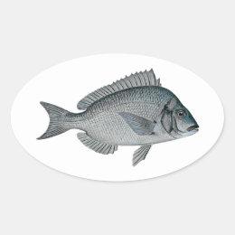 Porgy - Scup Oval Sticker