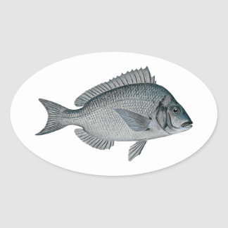 Porgy - Scup Stickers