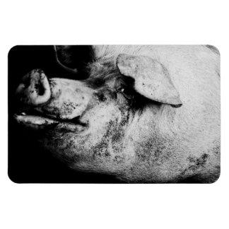 porker portrait rectangular photo magnet