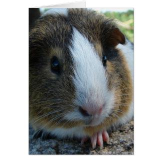 Porky the Guinea Pig Head Portrait Card