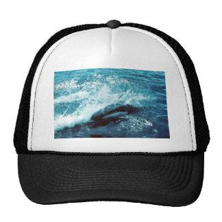 Porpoise Dall Mesh Hats