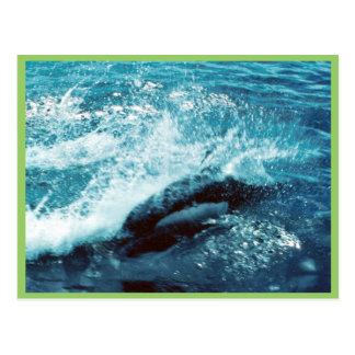 Porpoise Dall Post Card