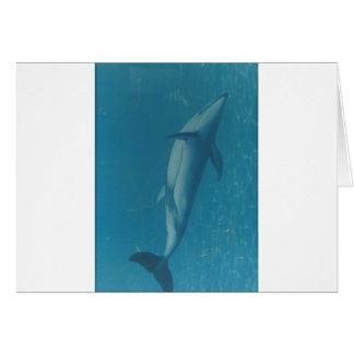 Porpoise in Blue Card