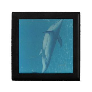 Porpoise in Blue Keepsake Box