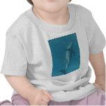 Porpoise in Blue Tee Shirt