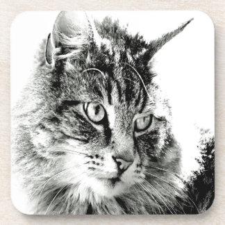 Porqué usted no me ama emoción del gato posavasos de bebida