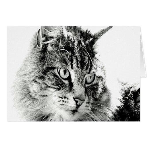 Porqué usted no me ama emoción del gato felicitaciones