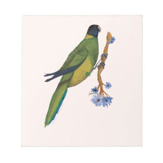 port lincoln parrot, tony fernandes notepad