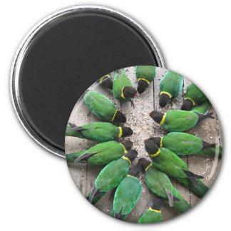 Port Lincoln Parrots Australia Magnet
