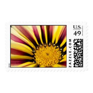 Port Wine Stripe Postage Stamp